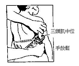 ... 三头肌的解剖_小腿三头肌图解,小腿三头肌图片图片